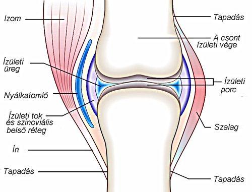 kenőcs a térd szalagjainak kezelésére az ízületi gyulladás típusa minden ízület