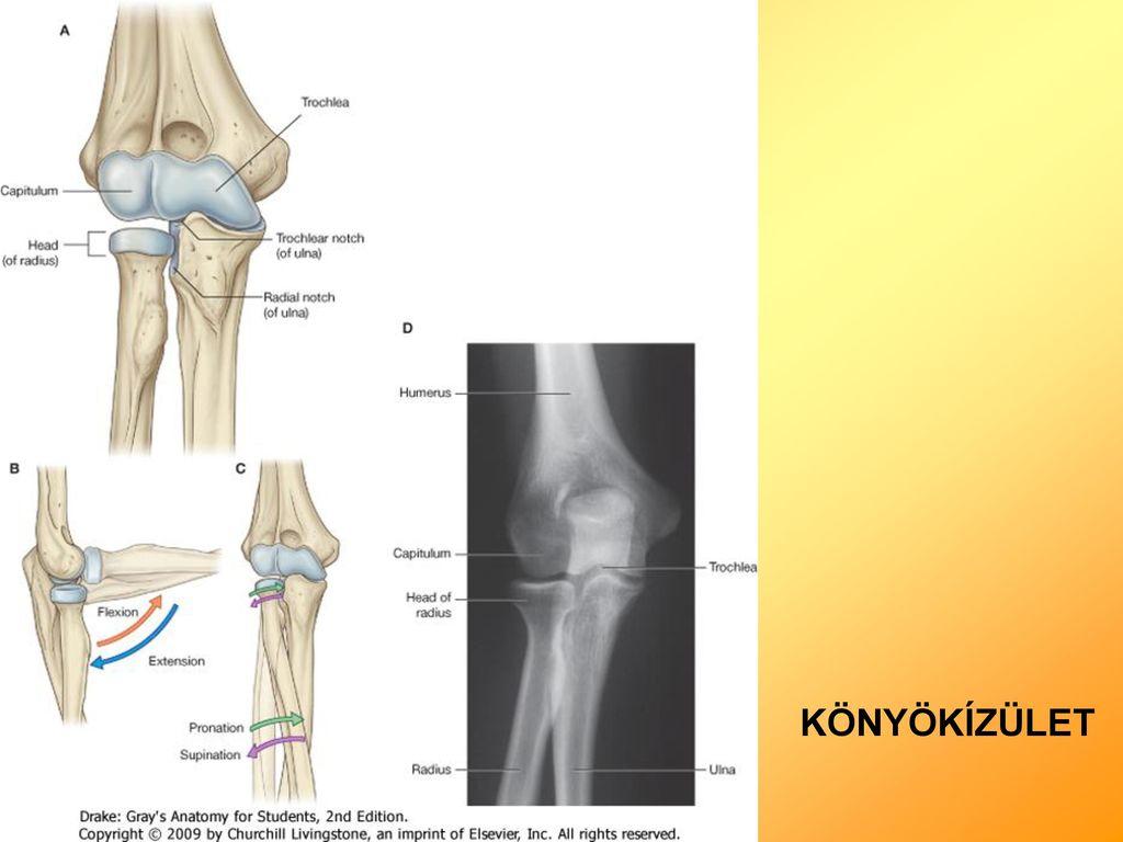 könyökízület osteoporosis kezelése