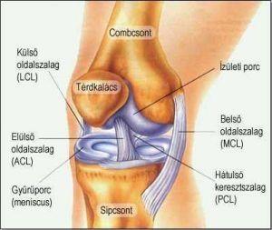 Törpilla – TPLO műtét a gyakorlatban