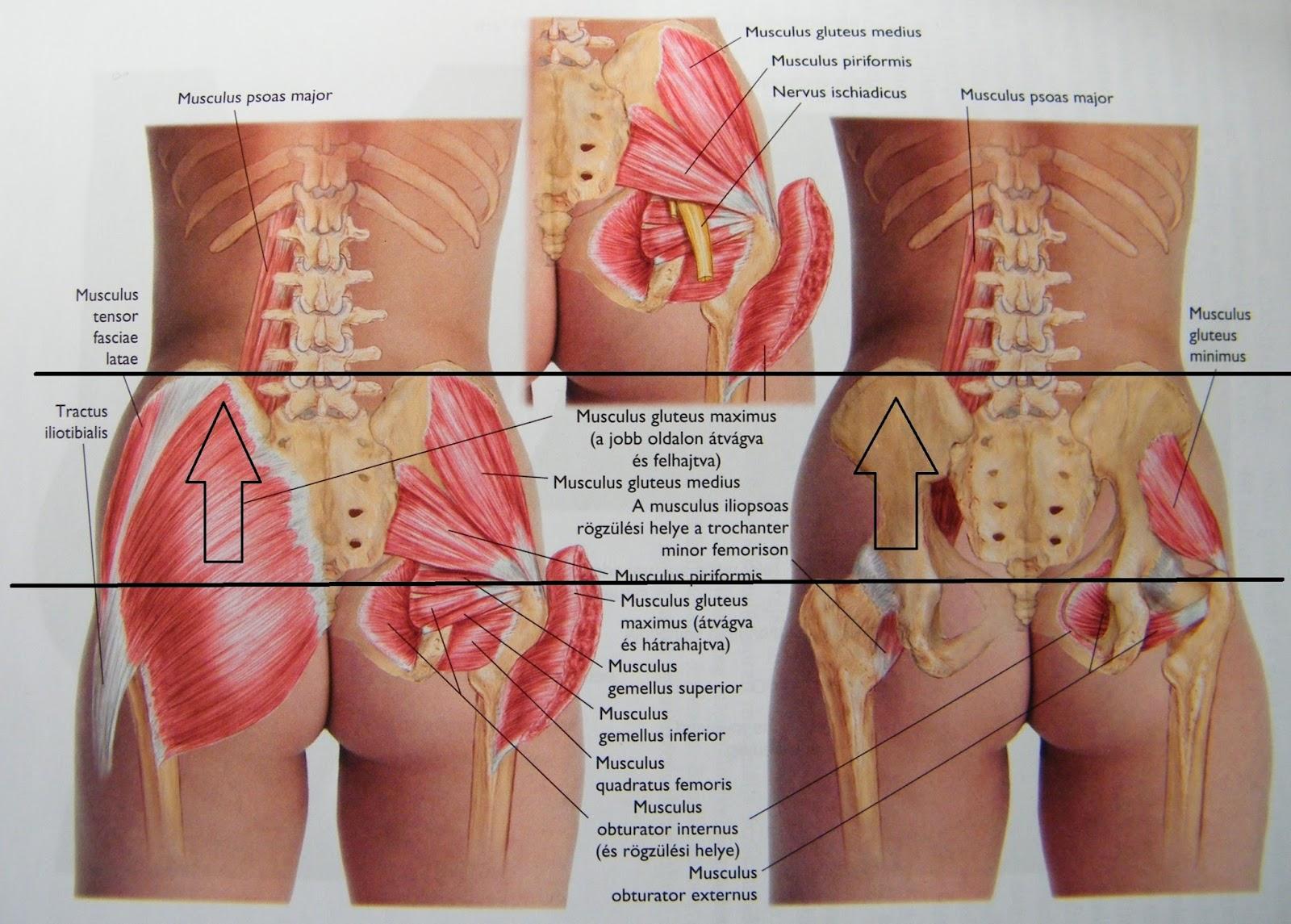 a combcsont és a fenék fájdalma