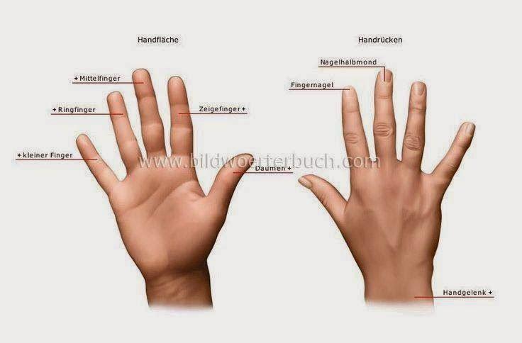 az ujjak és a)