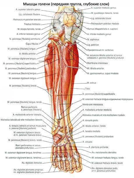 ízületek és az alsó láb fáj