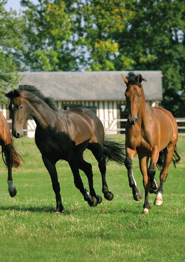 gél lovak és emberi ízületek számára