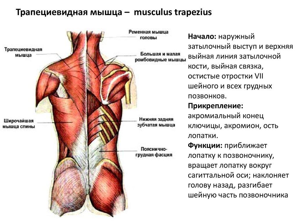 hogyan lehet enyhíteni a vállízületi neuralgia fájdalmát)