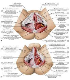 Tünetek és az acromioclavicularis ízület ízületi gyulladása