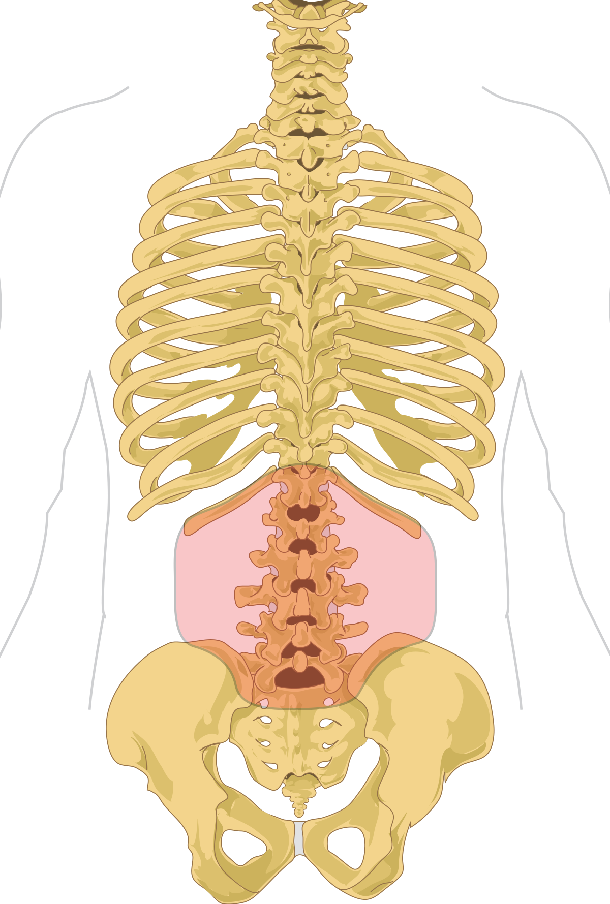 Csípőfájdalom – Csípőkopás | szoszszc.huán István ortopéd sebész praxisa