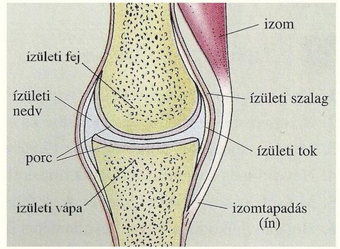szakaszos fájdalom a csontokban és ízületekben)