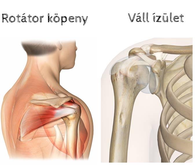 fájdalom okozza a váll és a könyök ízületeit mentő térdfájdalomra