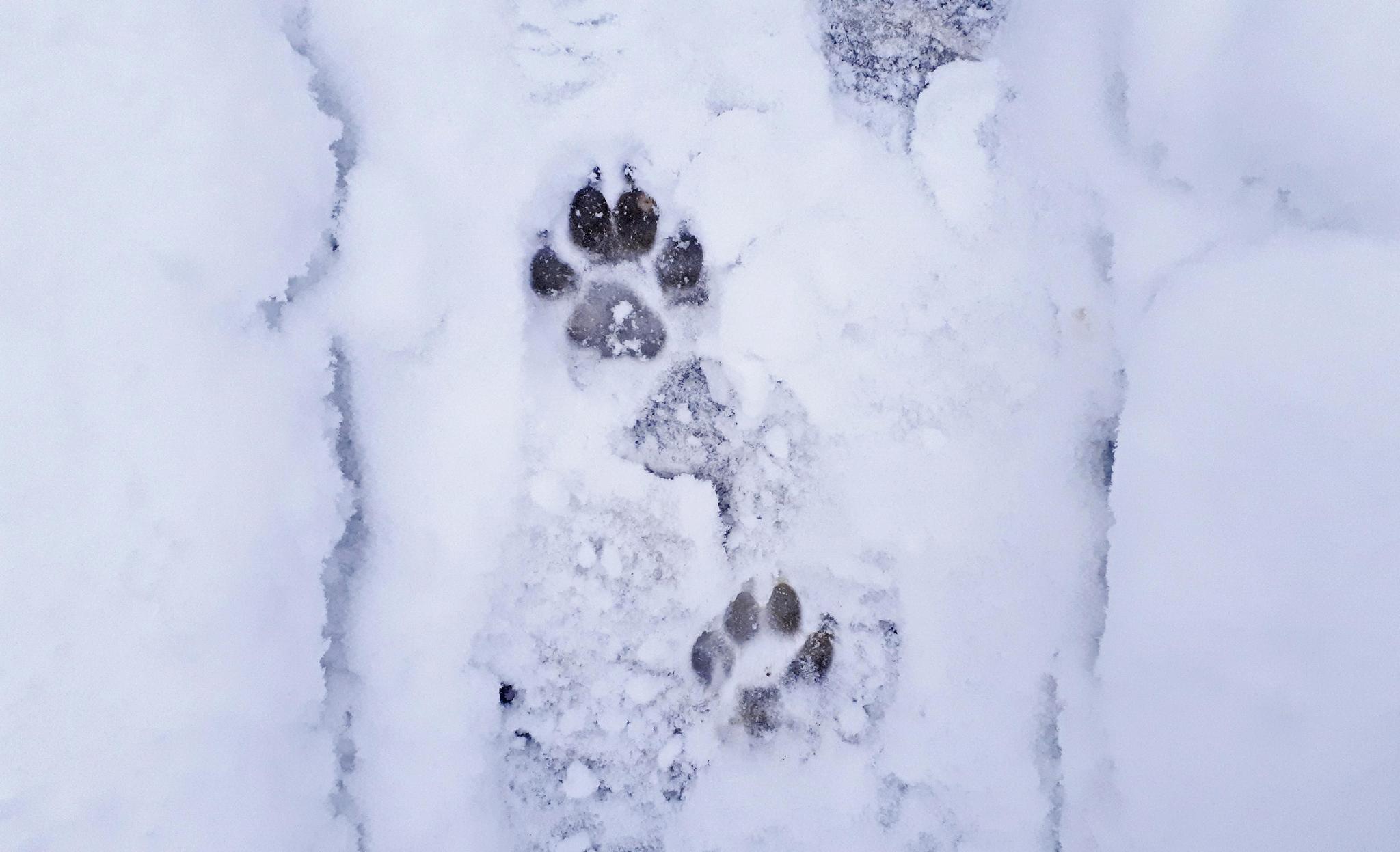 ízületi fájdalom kezelése hóval és sóval)