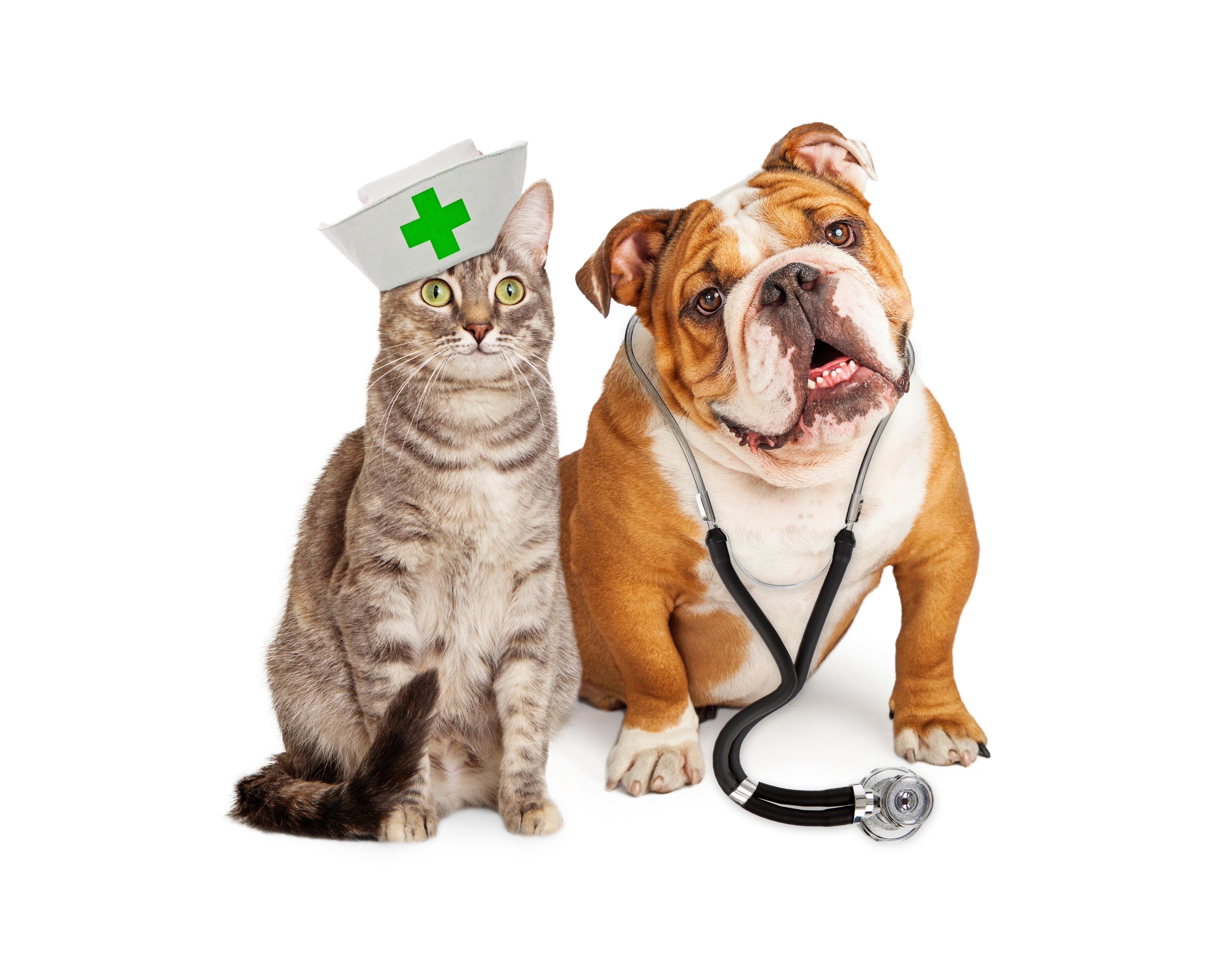 állatorvosi együttes kezelés)