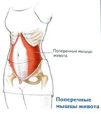 mit lehet enni térdízület artrózisával)