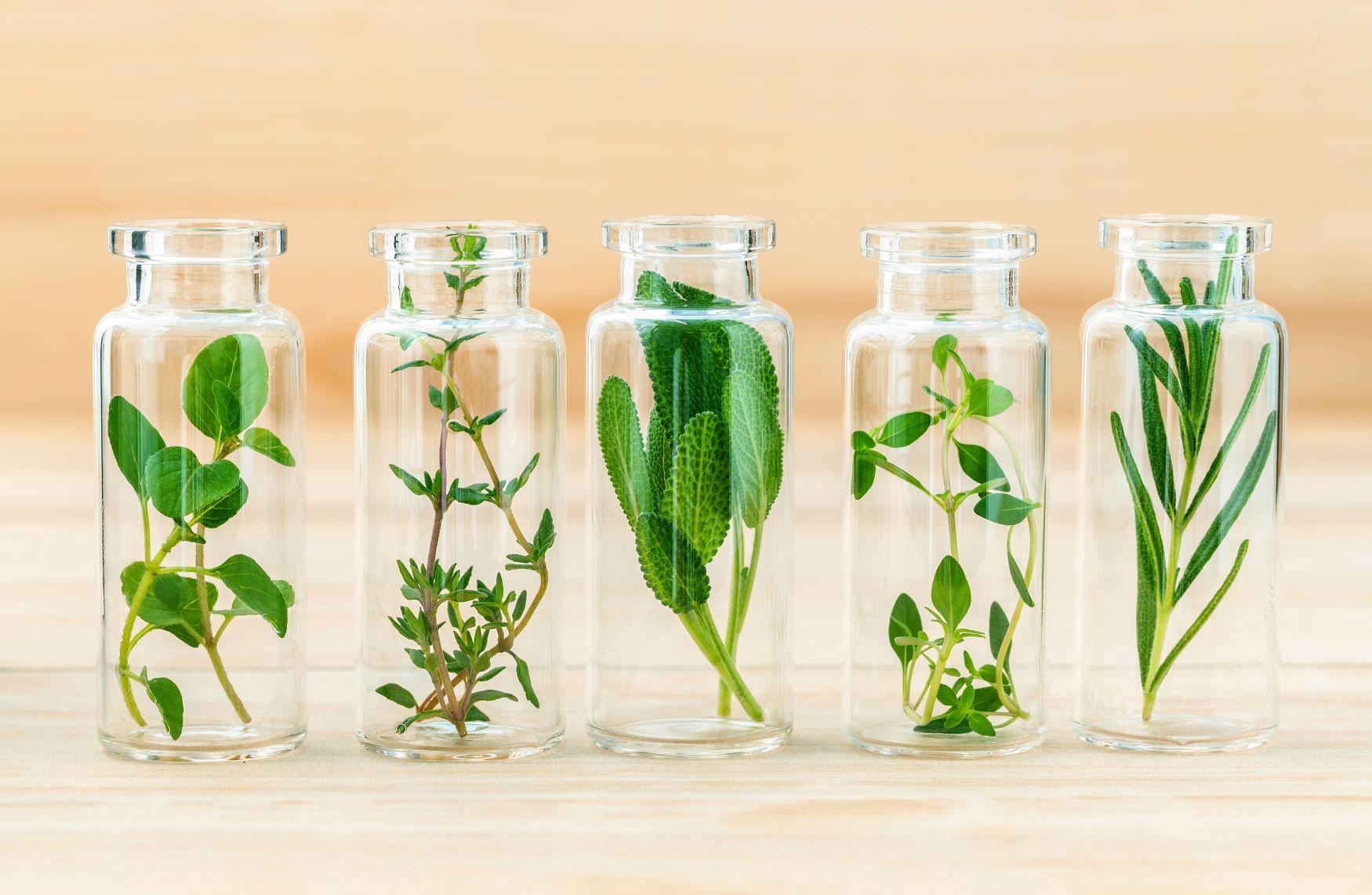 gyógynövények ízületi ödéma esetén)
