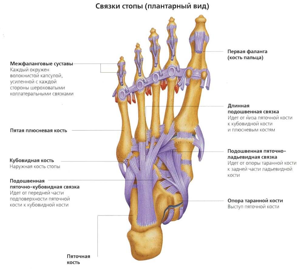 az ortopéd kezel a csípőízület coxarthrosisát