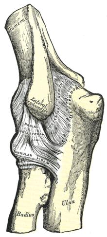 a nagy lábujjak ízületeinek kezelése ízületi fájdalmak edzés után