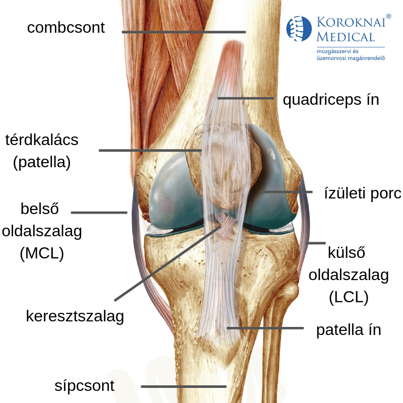 ízületi fájdalom a lábán, a boka közelében)