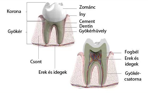 fájdalomcsillapító fogfájás