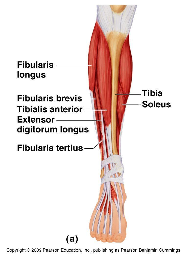 már egy hónapja fáj a vállízület csípőízület osteoporosis kezelése