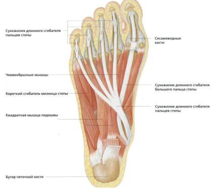 a hüvelykujj fáj a járás közben)