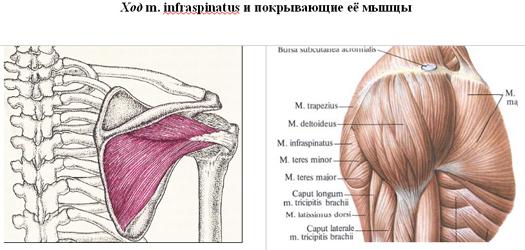 a vállízület nyakának törése