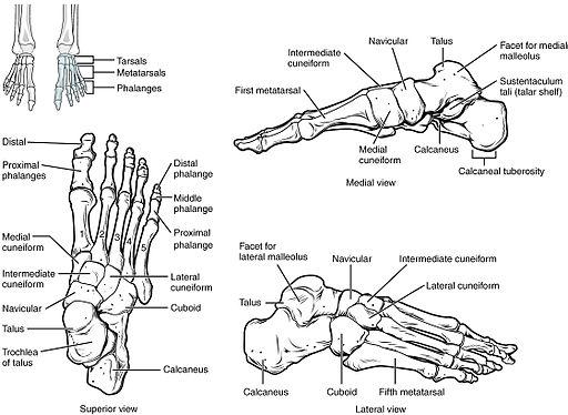 miért a lábak ízületei és a hát alsó része)