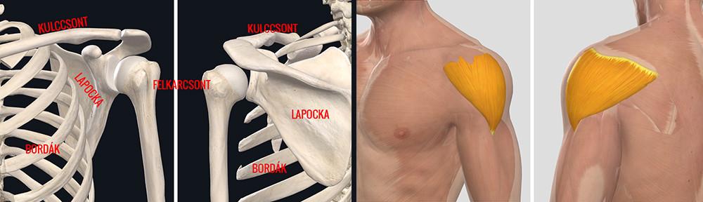 váll sérülések kezelése)