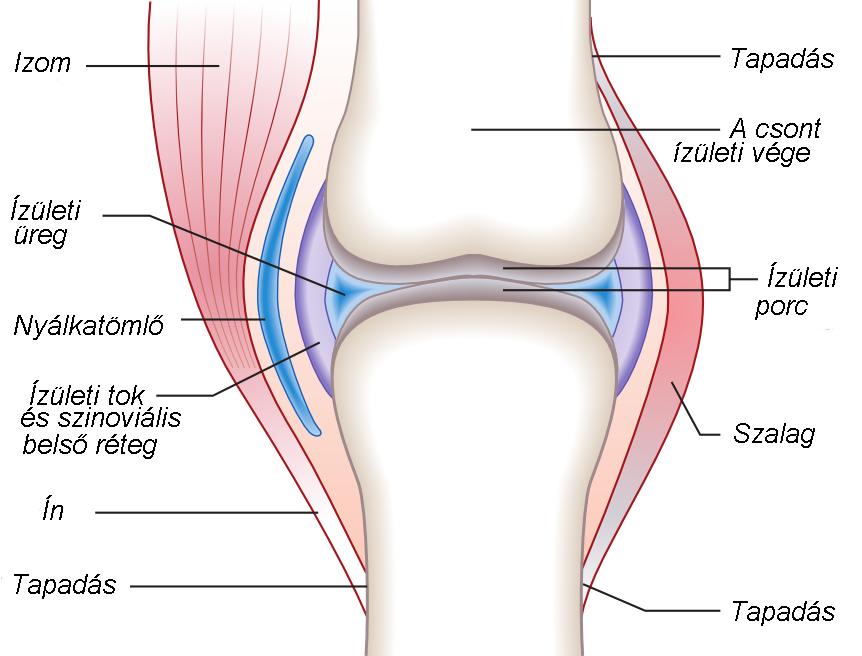 térdízület akut fájdalma és ízületi gyulladás