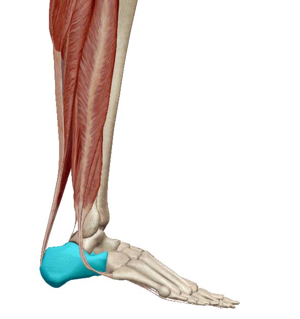csontritkulás milyen kenőcsök lábízület betegségek