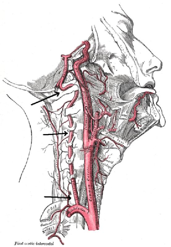 a nyaki gerinc csontritkulásának és artrózisának kezelése gyógyszerpor ízületi fájdalmakhoz