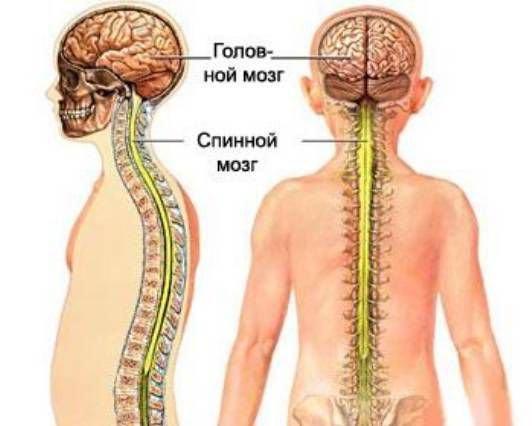 A bordázott ízületek artrózisa: jelek, okok és kezelés