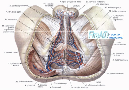 a térdízület külső oldalsó ágának részleges károsodása a kiálló fájdalom a csípőízületre sugárzik
