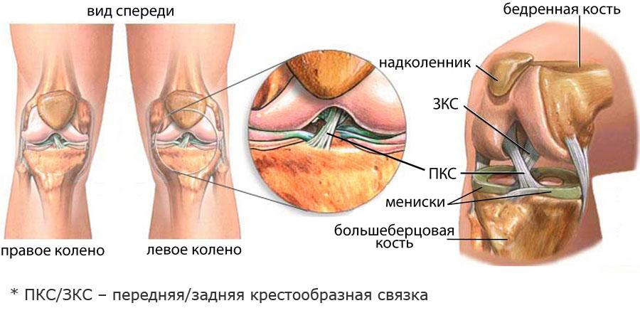 teraflex a térd artrózisáról