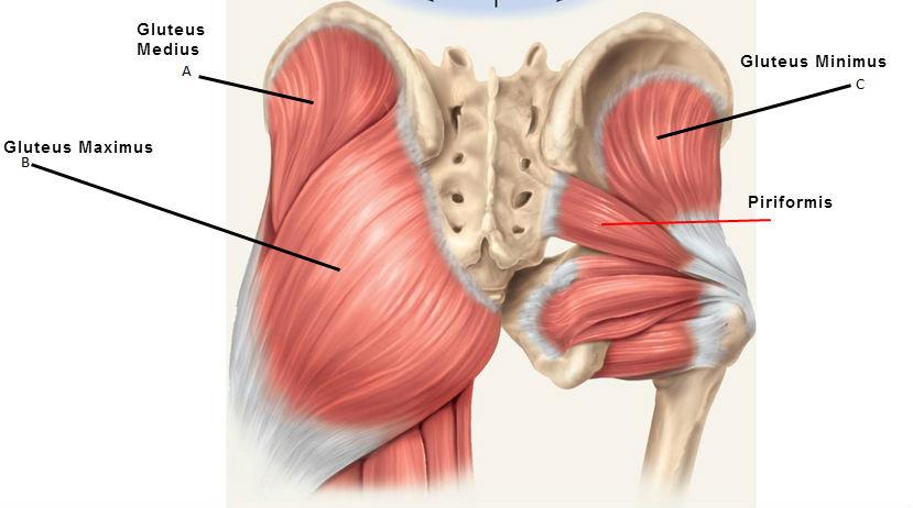 az alsó csípő fájdalmas ízületei