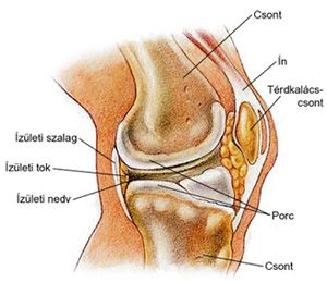 ahol az artrózist kezelik