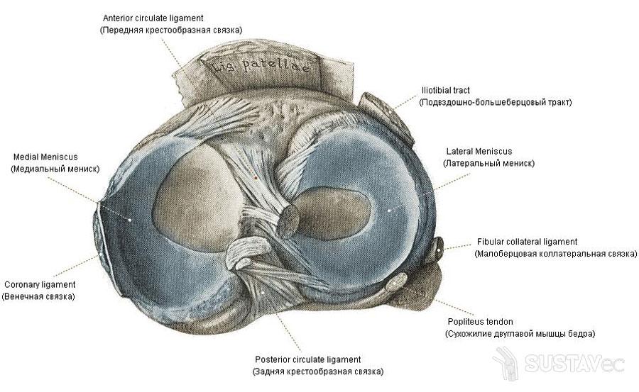 csípőízület artrózisával szülhet