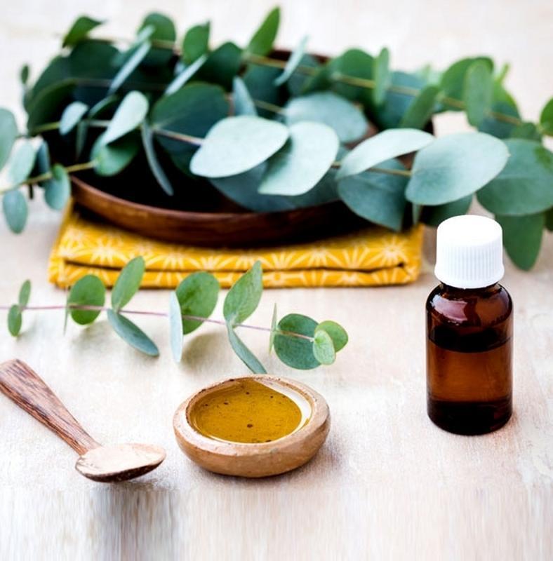eukaliptusz olaj ízületek kezelésére