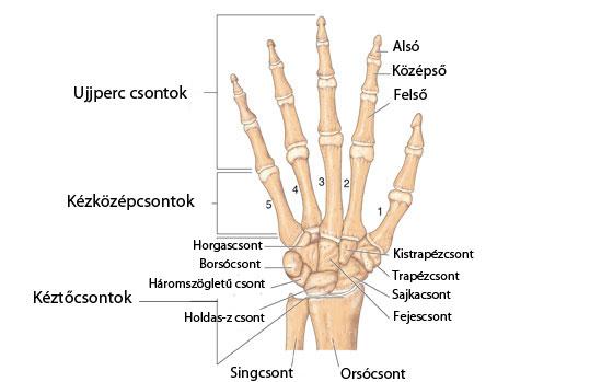 csont-lábízület betegség)