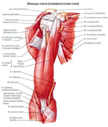 brachialis periarthritis és a vállízület ízületi kezelése)