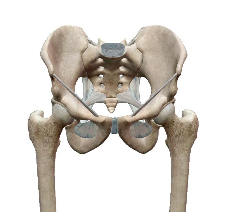 csípő lábfájdalma