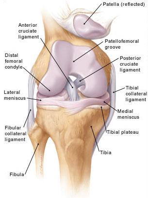 fájdalom a térdben és környékén a lábak ízületeinek osteochondrosis