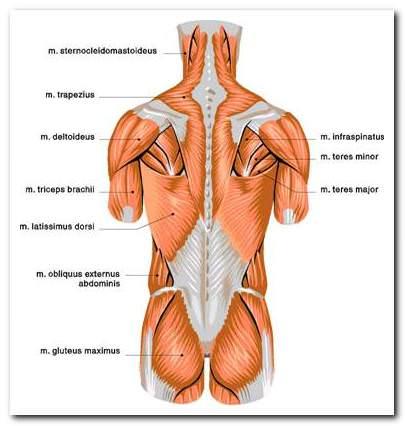 csípőízület kezelése gyógyszeres kezelés gyengeség fáj az izmokat és az ízületeket