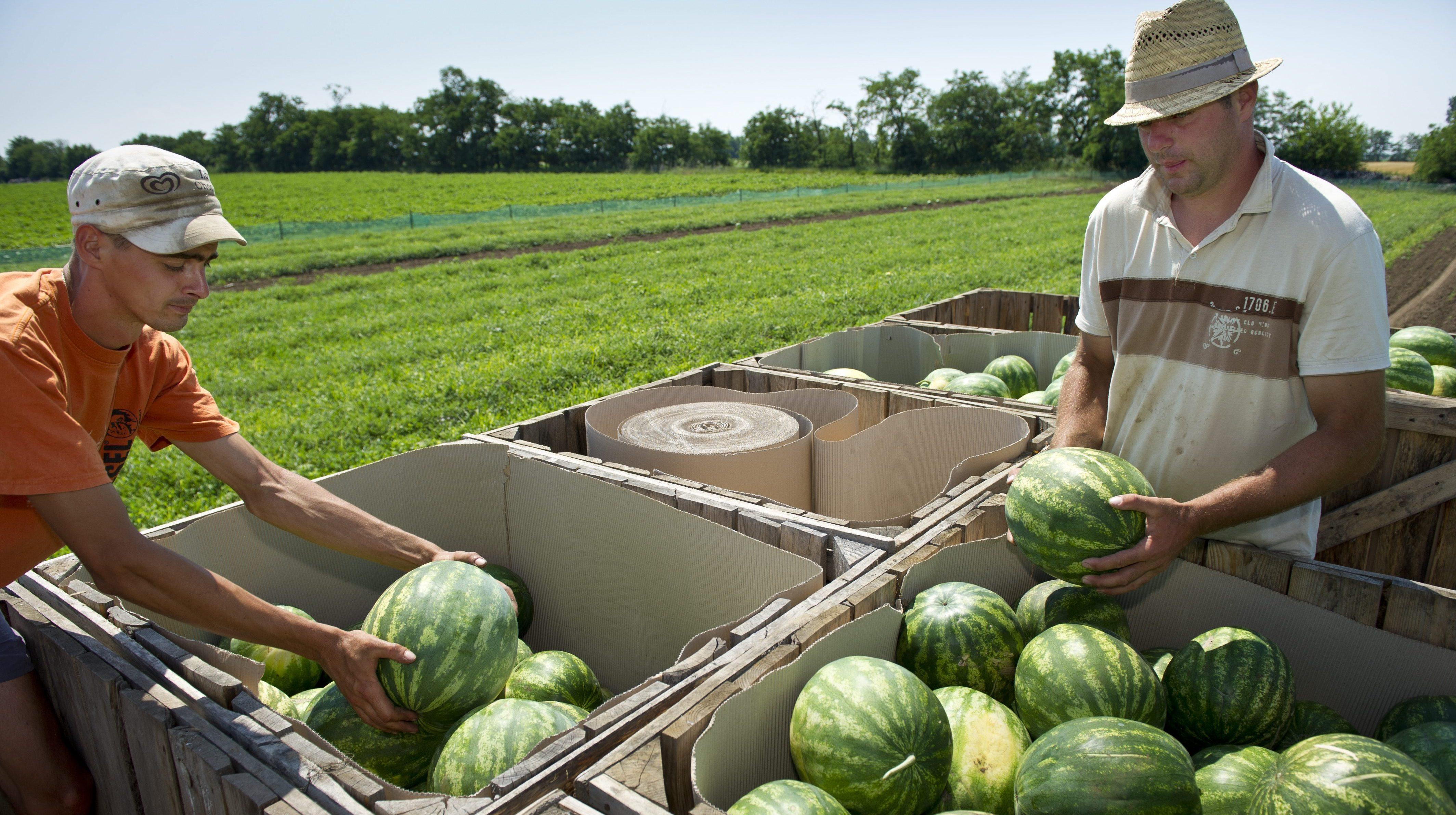 görögdinnye ízületi kezelés