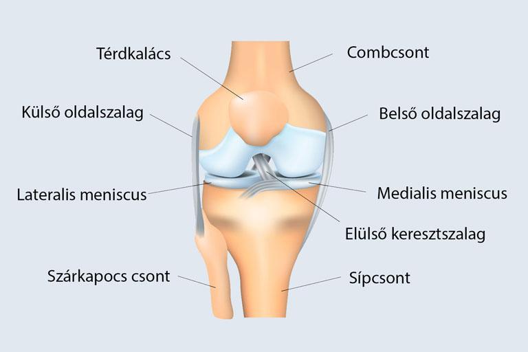 gyógyítja a térdízület fájdalmát