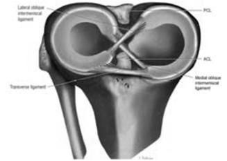 hematoma térdízület kezelése