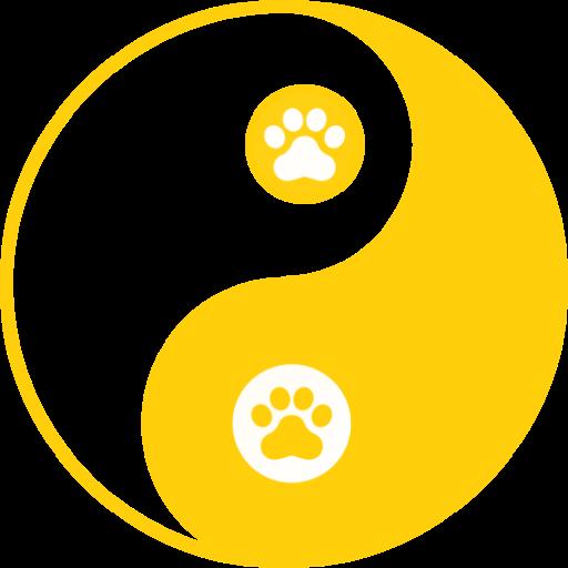 Top 10 Kutya Betegség (Fontos Tanácsok Minden Kutyagazdinak)