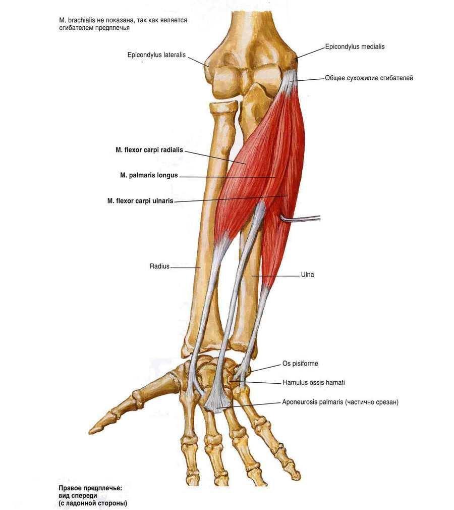 mi a könyökízület artrózisának kezelése gyors megoldás az osteochondrosisról