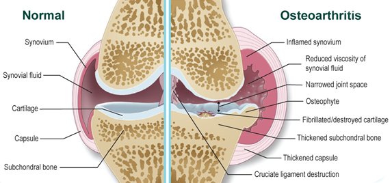 GUNA mozgásszervi fájdalomcsillapítás