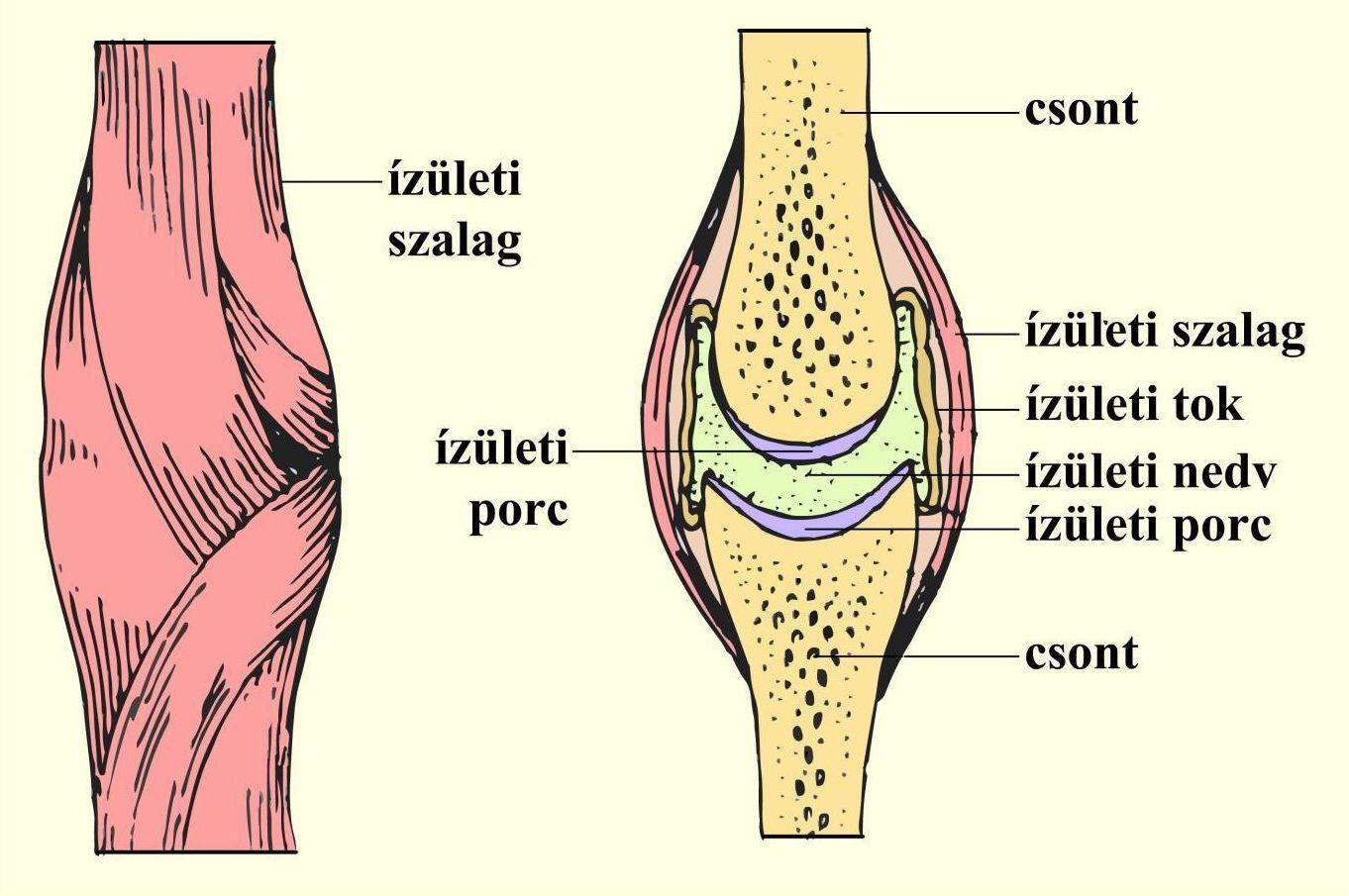 típusú kenőcsök ízületek kenőcs térdfájdalom esetén