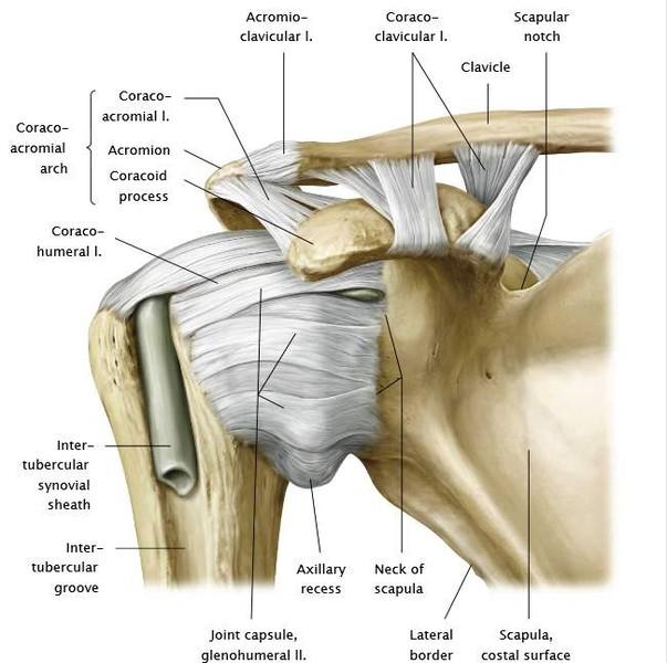 testépítés a vállízületek fájdalma miatt)
