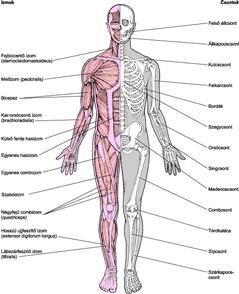 ízületek és csontok gyulladása ízületi fájdalom és csontfájdalom