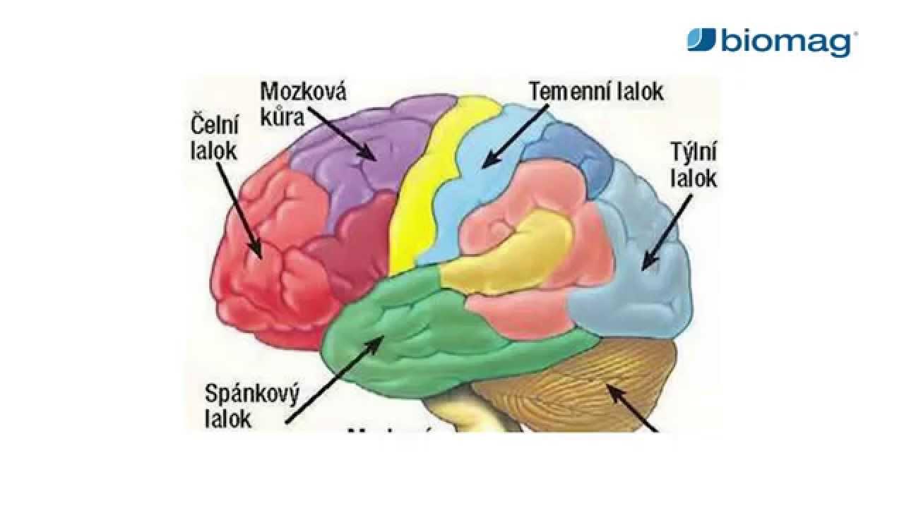 Szklerózis multiplex | TermészetGyógyász Magazin
